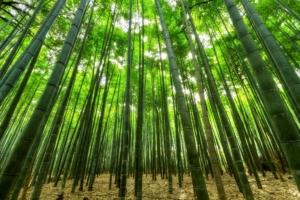 bambus wie unkraut winterfest armbanduhren holz