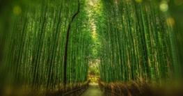 bambus rohstoff nachhaltig armbanduhren holz
